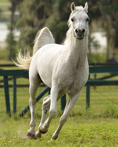 arabian horses florida tours