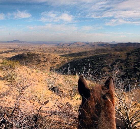 arizona sasabe horseback riding