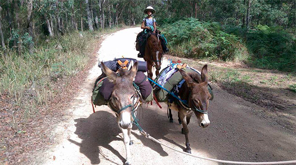 Australia's Bicentennial National Trail donkey children