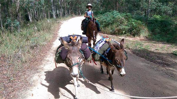 Australia's Bicentennial National Trail donkey children