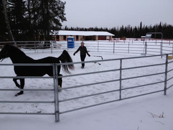 Ruth Arcand Park horse