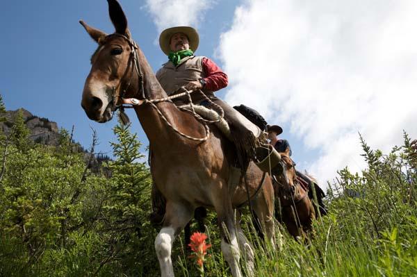 Banff Mules