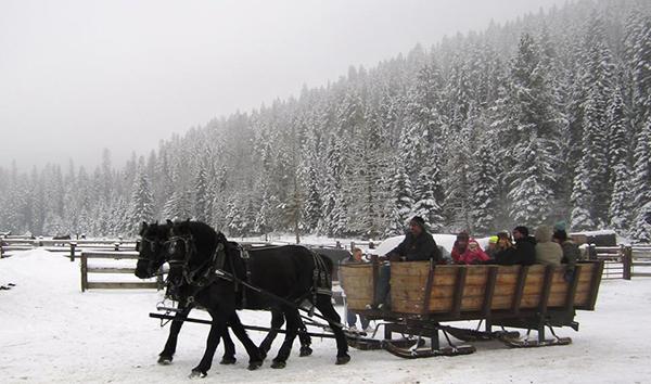 bar w sleigh ride horse drawn
