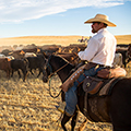 Bar W Spring Cattle Drive