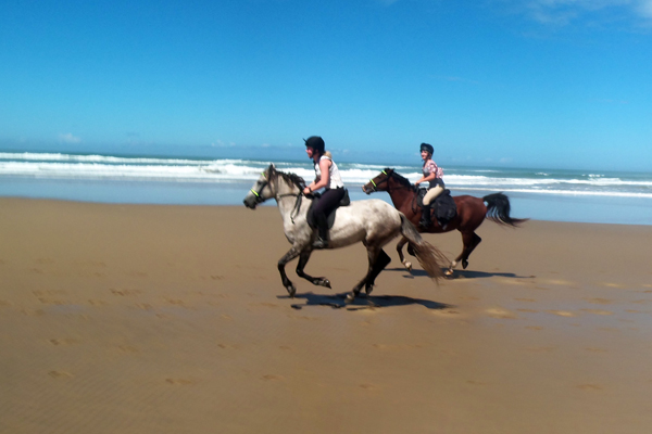 beach gallop south africa