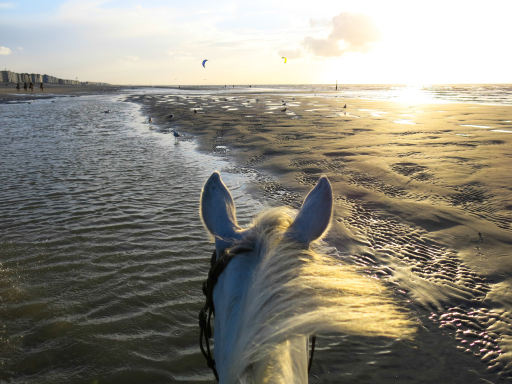 Horseback riding North Sea Belgium