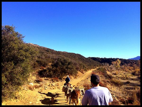 bear camp horseback california