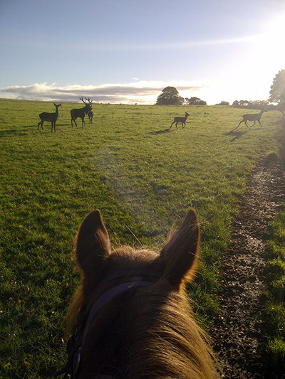 between the ears horseback Ireland Ring of Kerry wildlife