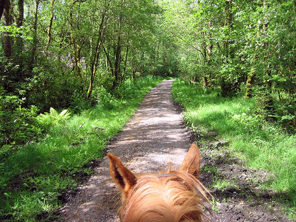 between the ears horseback Ireland Ring of Kerry trails