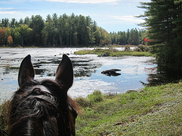 between the ears view of hayes marsh new hampshire