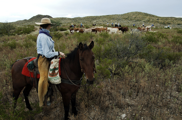 Equestrian Travel Articles - Bring Your Own Horse ...