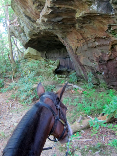 horseback riding big south fork tennessee