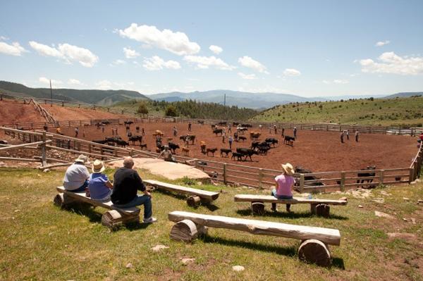 black mountain ranch colorado cattle drives