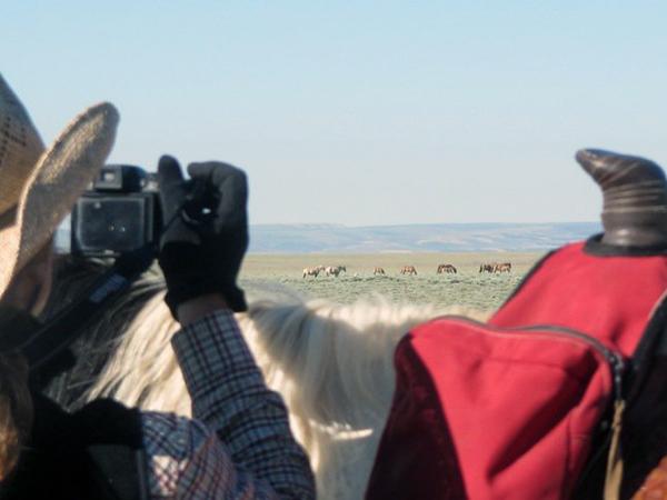 blue sky sage wyoming wild horse tours