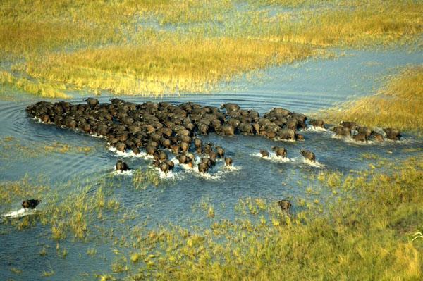 Botswana Riding Safari