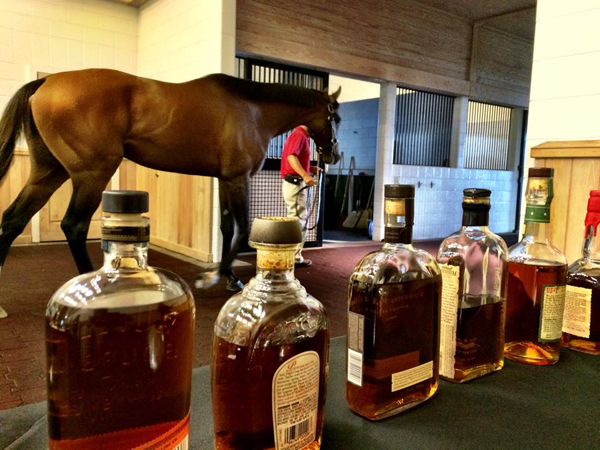 Bourbon Trail Thoroughbred Horse