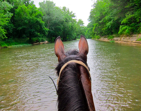 Buffalo River horse riding