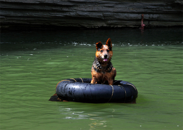 Buffalo River Tennessee dog