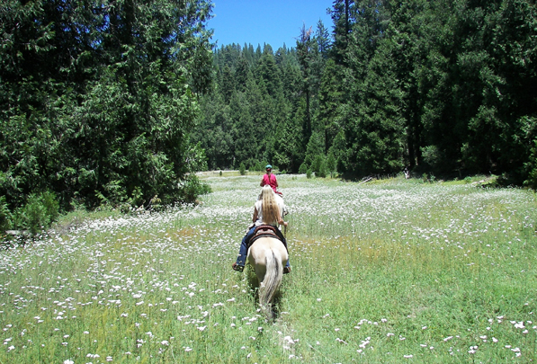 california meadow horse trails