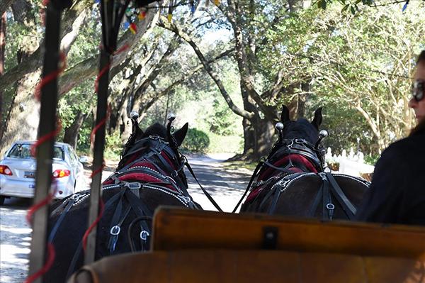 Camden SC horse drawn carriage