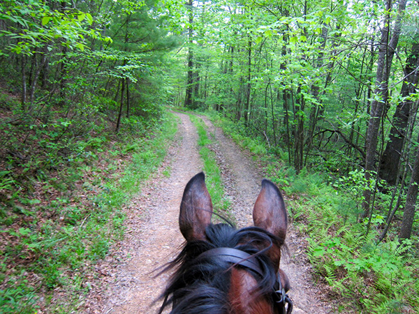 Camp Creek State Park West Virginia horseback riding