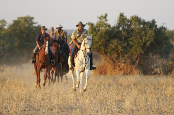 limpopo horse safaris africa