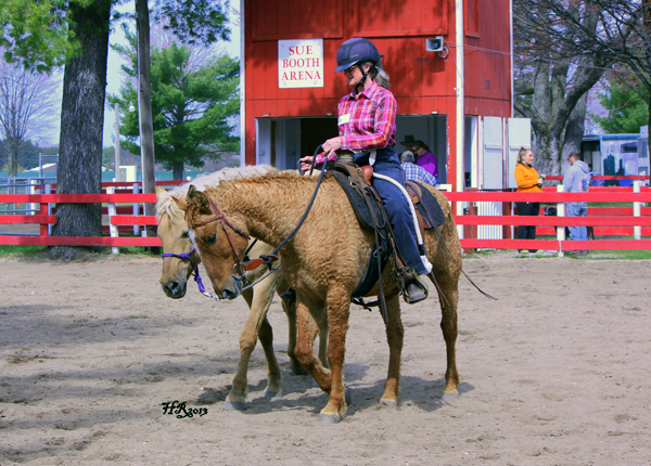 Curly horse breed profile