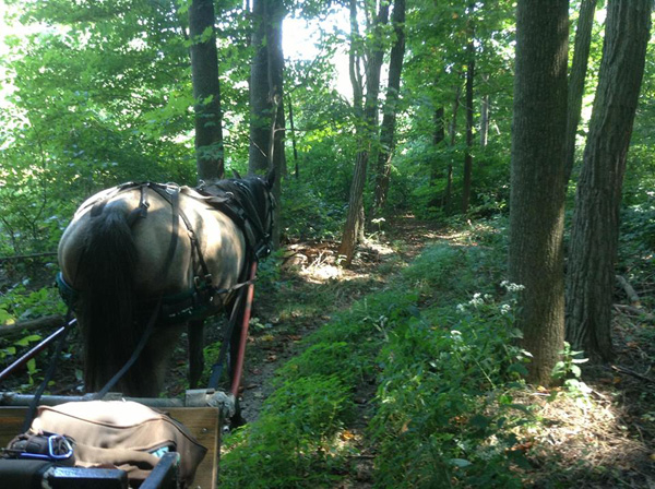 Horse carriage driving forest paths