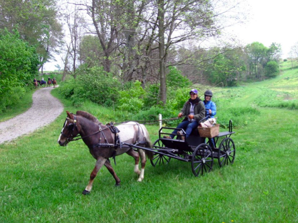 carriage driving shaker village kentucky