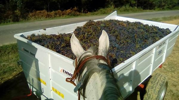 Castellare di Tonda Italy horse riding
