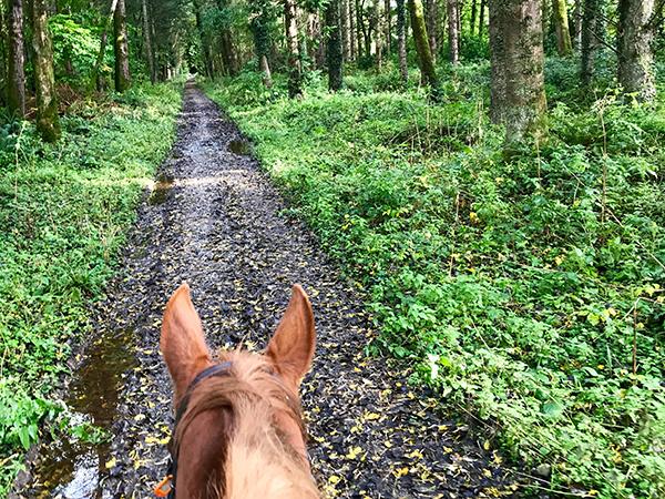 castle leslie horse riding Ireland