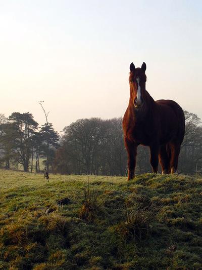 Castle Leslie Ireland horses