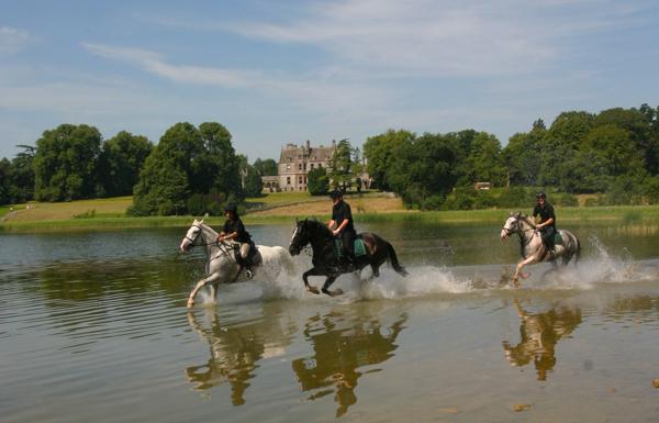 horses galloping through lake castle leslie ireland