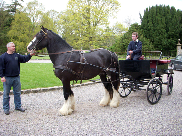 Castle Leslie Carriage Ride