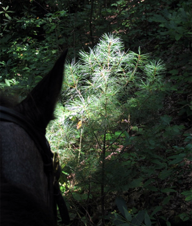 cherokee national forest horseback trails