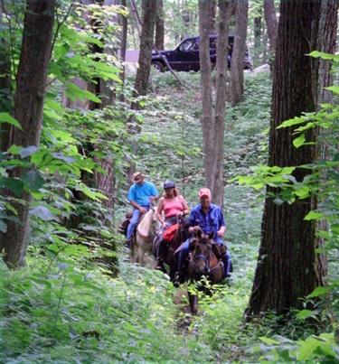 cherokee national forest horseback riding