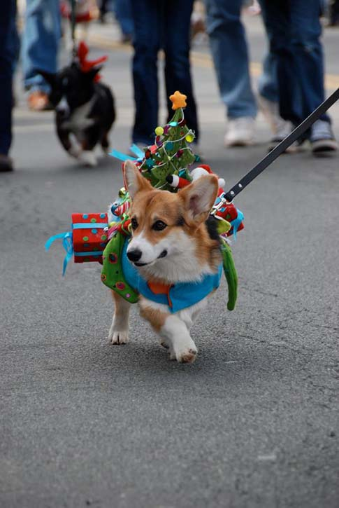 Christmas in Middleburg in Corgi
