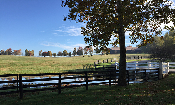 claiborne farm paris kentucky