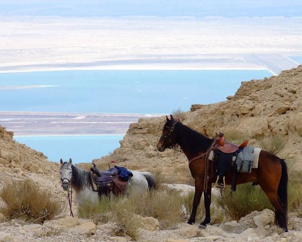 horses rest cliffs dead sea