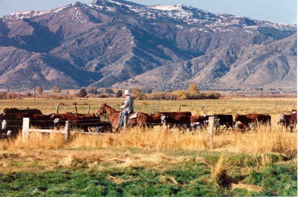 Image result for cattle ranches in wyoming