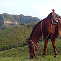 colombia horseback riding