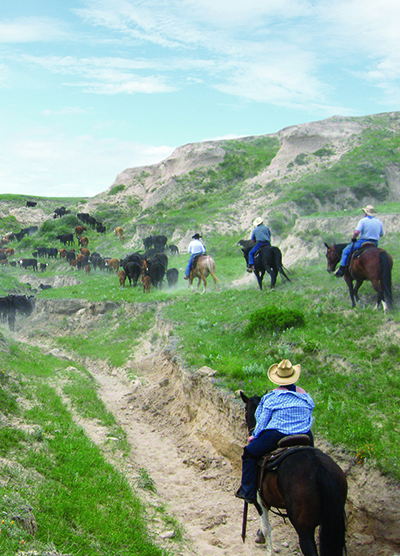 Colorado cattle company cattle drives