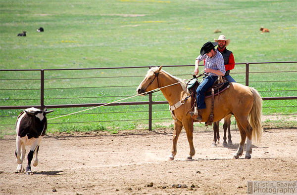 Colorado cattle company roping lessons