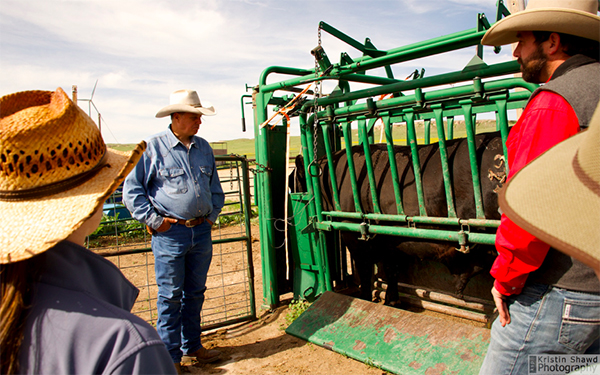 Colorado cattle ranches bull inspections