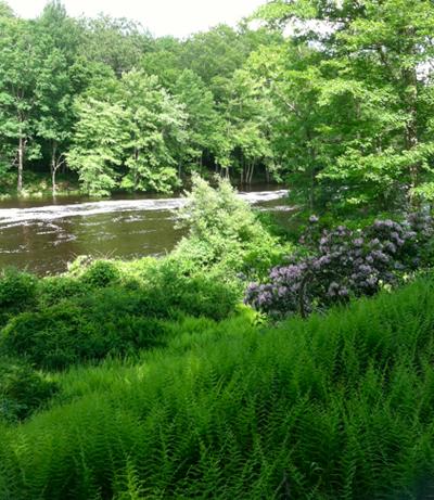 Mountain Laurel Sprague Land Preserve Connecticut