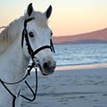 Connemara Equestrian Escapes Ireland