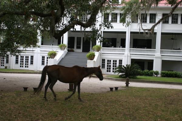 Greyfield Inn wild horse