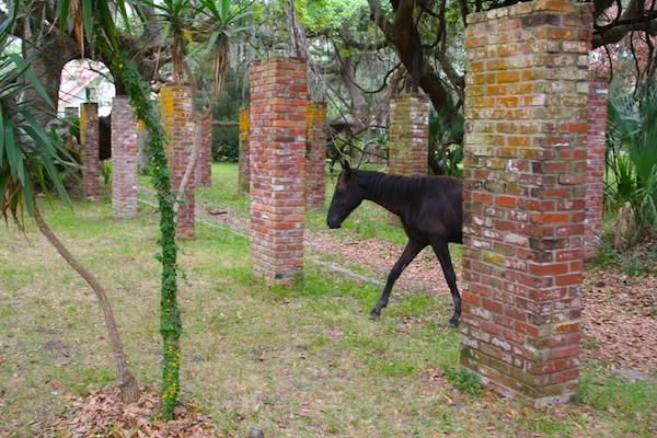 wild horses Cumberland Island