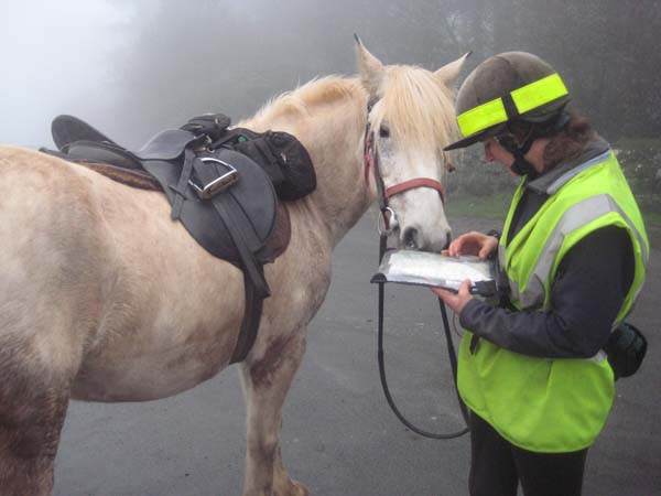 dartmoor horse riding in fog