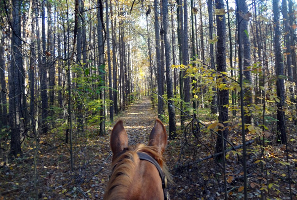 Cope Hollow Trail in the Deam Wilderness horseback riding
